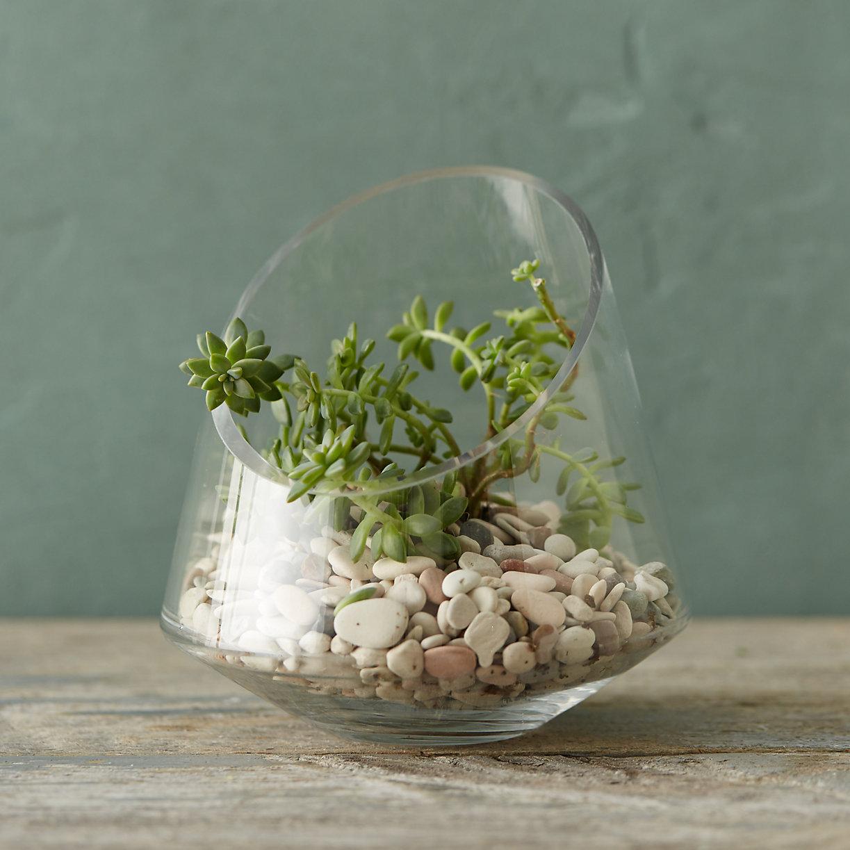 11 Unique Glass Terrariums In 2017 Best Decorative