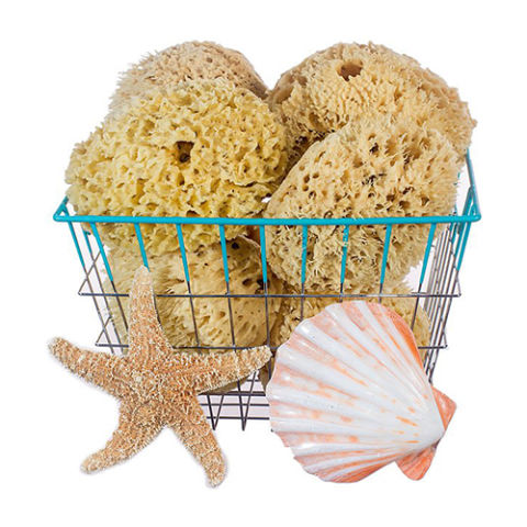 Natural Bath   Body Shop Premium Rock Island Wool Sponges10 Best Bath Sponges for 2017   Exfoliating and Natural Bath and  . Bath And Body Shop Toronto. Home Design Ideas