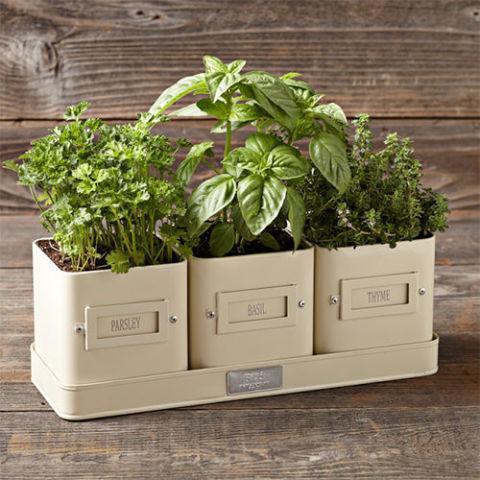 10 Best Indoor Herb Gardens in 2017 - Indoor Gardens for Growing Herbs