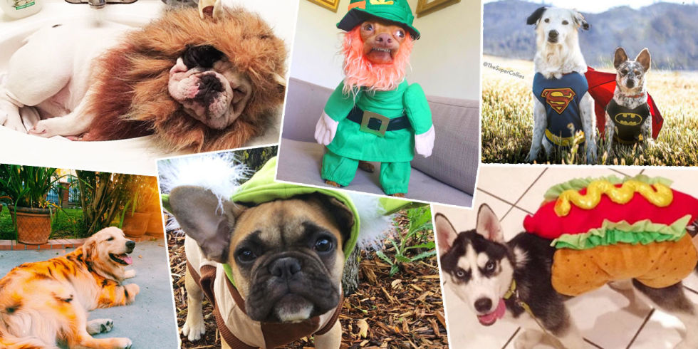 Image result for pet halloween costumes for dogs