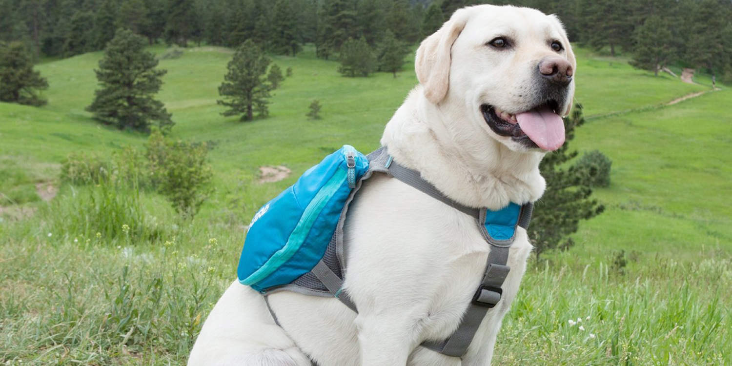 9 Best Dog Backpacks For Hiking And Camping 2017 Small