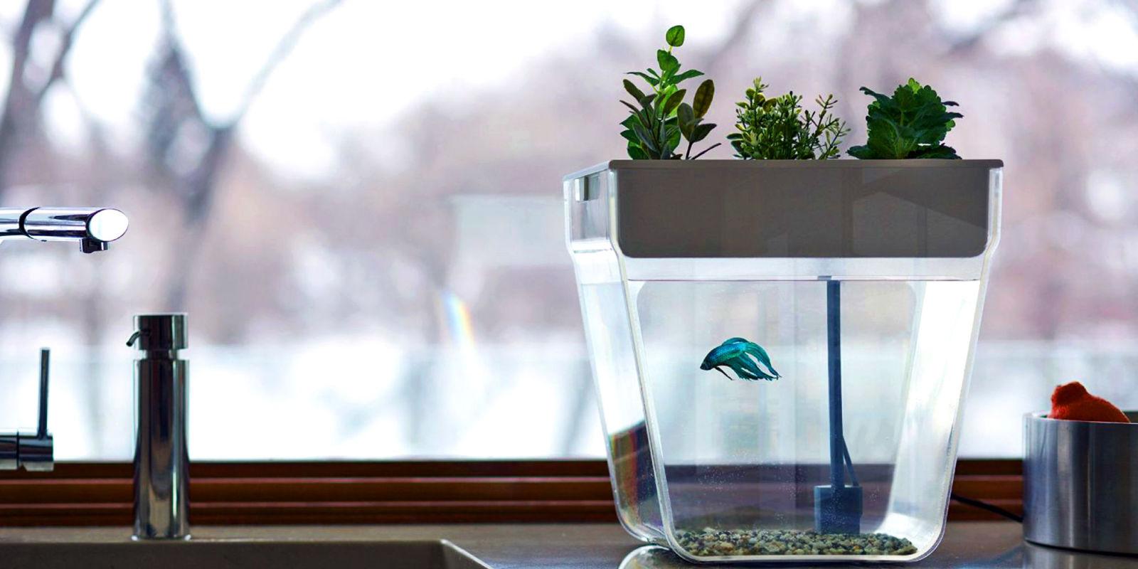 5 Best Aquatic Ecosystems Of 2017   Freshwater Aquatic Ecosystems And  Terrariums