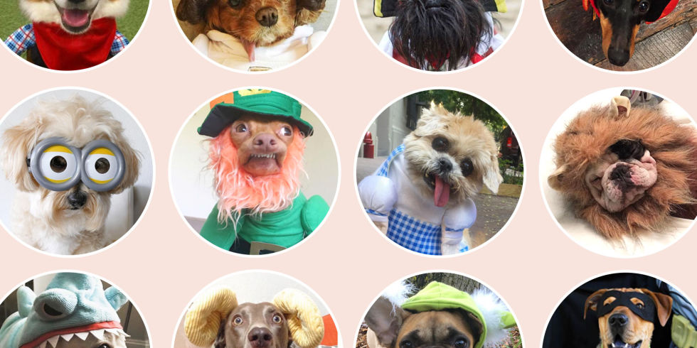29 Best Dog Costumes for Halloween 2018 - Cute Halloween Costumes ...