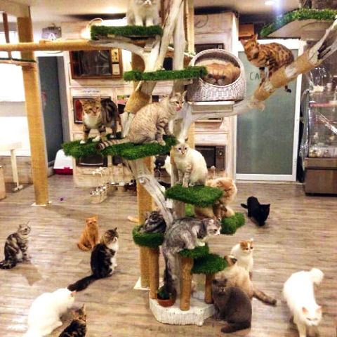 Location: Bangkok, Thailand An adorable place with whimsical decorations all over, Caturday is one of the most lively cat cafés you can find. The place has about 40 cats in the café (20 out roaming at a time), and they all love attention. The café also has a big menu to choose from, but one item that's a must is the rainbow crepe cake — it's almost as cute as the cats! More: 16 Cat Toys That Are Sure to Excite Your Feline