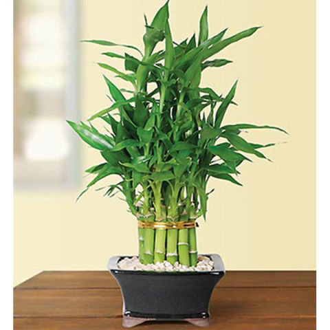 10 Best Indoor Plants for Your House - Indoor House Plants to Buy ...