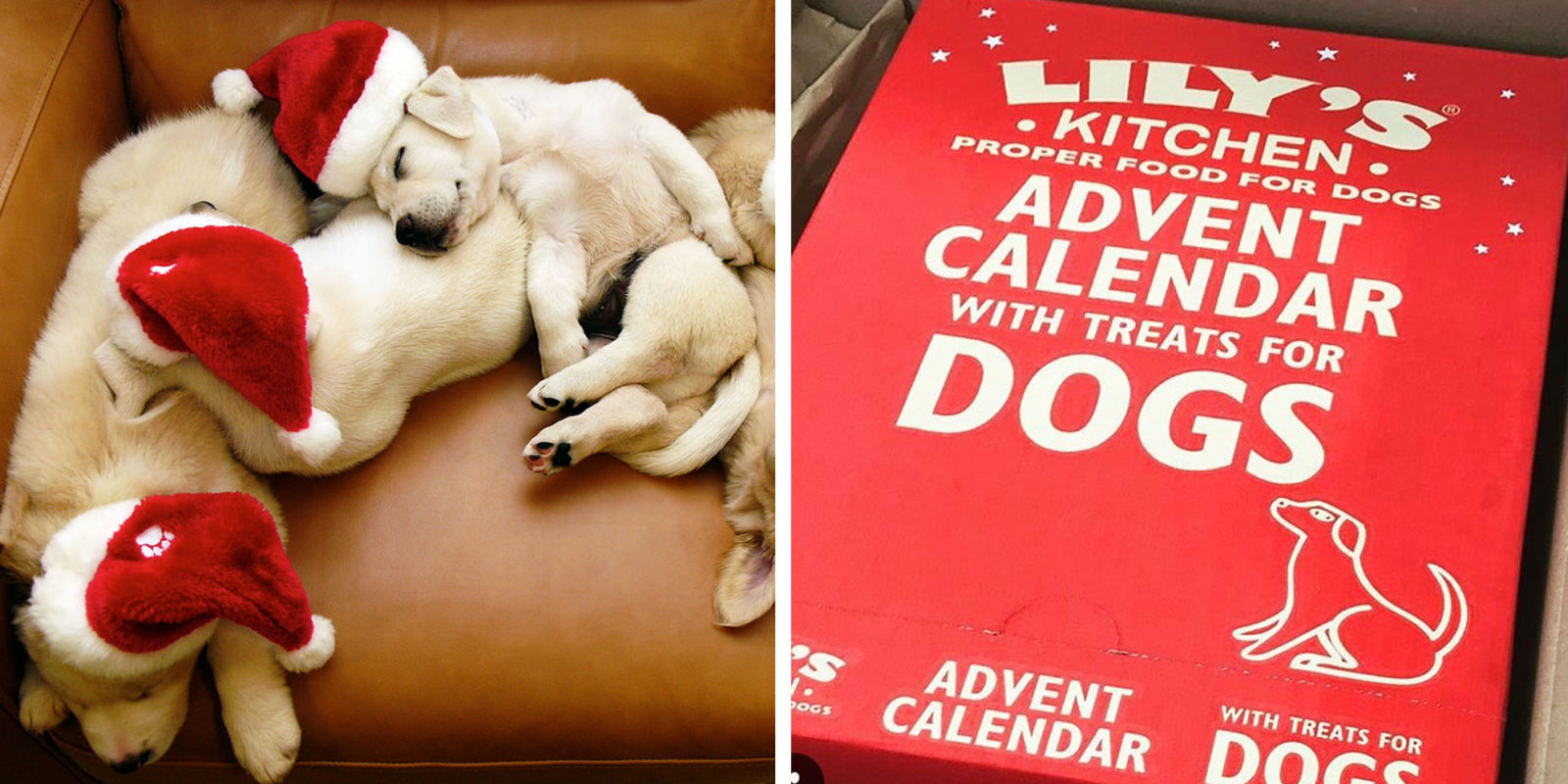 new christmas advent calendar available for cats and dogs u2014 a